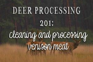 Deer Processing 201: Cleaning and Processing Venison Meat