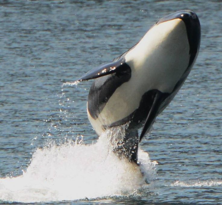 I´m so lovely! Saucisse (AJ46). Captivity kills! Take the pledge not to buy a ticket to any marine or sea park!