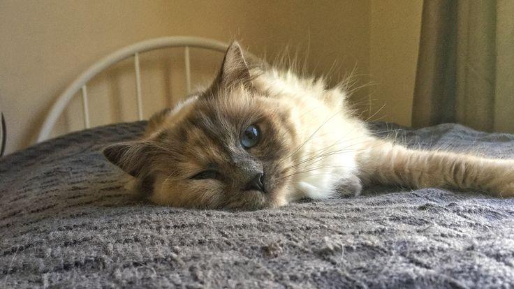 Bio cat loves bio mat
