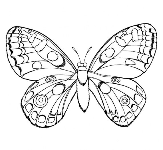 https://anthipatsouri.files.wordpress.com/2012/03/butterfly-1-coloring-page-gif.jpg