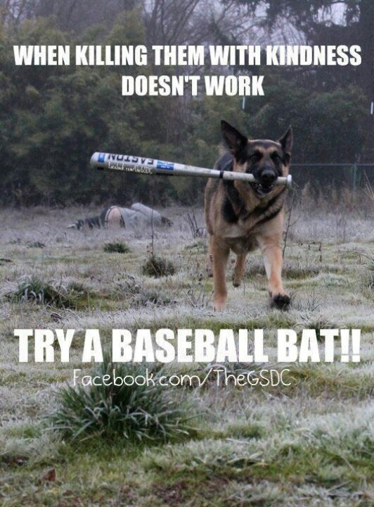 79 best images about German Shepards on Pinterest | Cars ...