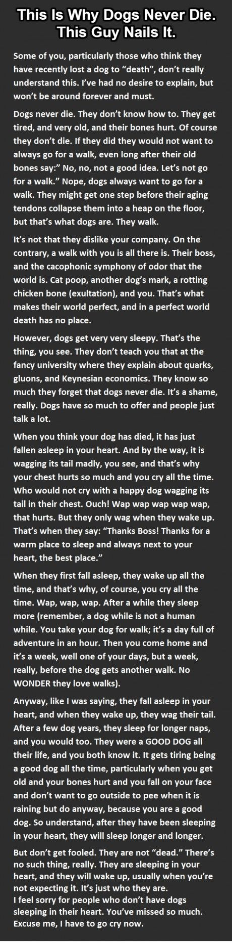 Why dogs never die