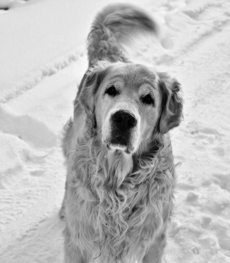 Beyond the silver lining: Snowy doggy