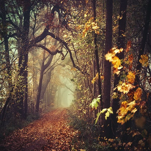 Ad Libitum III by =Oer-Wout on deviantART nature leaves fall