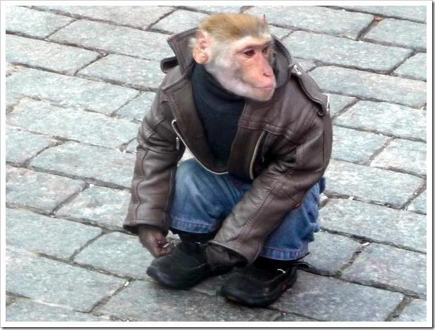 9 best monkeys in coats images on Pinterest | Coats and Monkeys