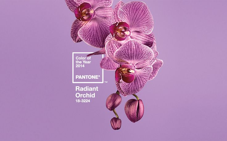 Pantone Color of the Year 2014 is Radiant Orchid! 18-3224