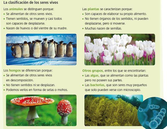 Los seres vivos  realizan las funciones de nutrición, relación y reproducción.   Los seres vivos se clasifican en 5 reinos.    aitanatp.com...