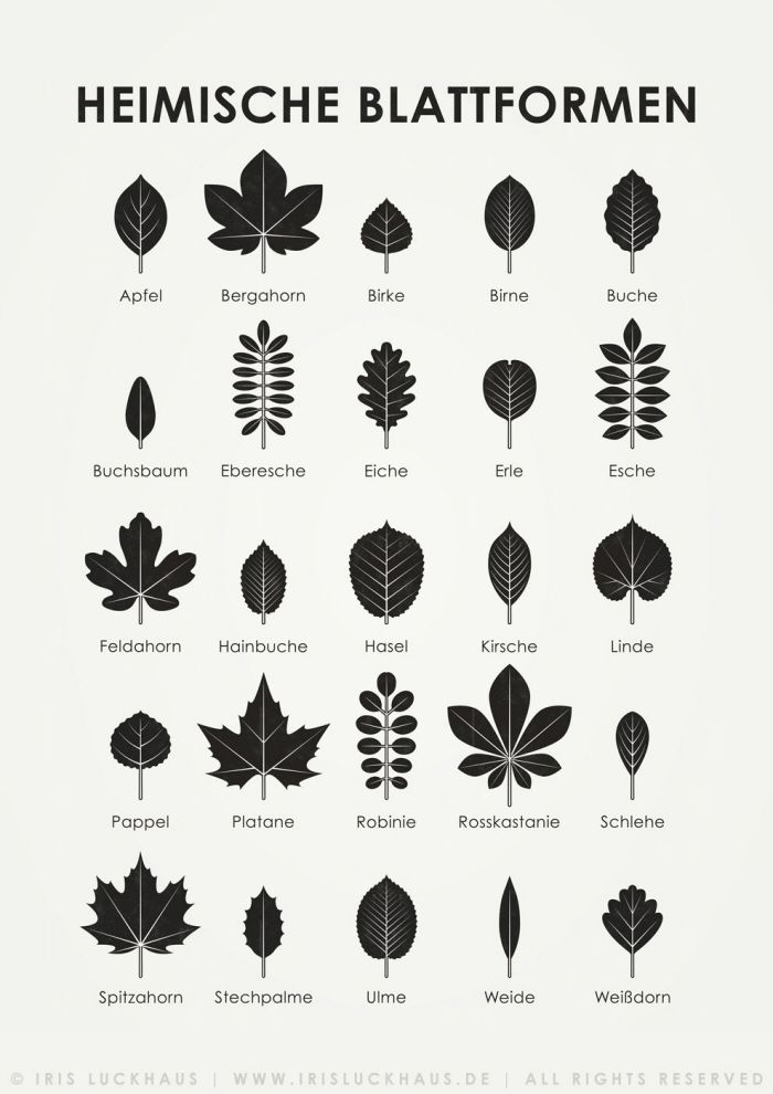 Sheets for the identification of different leaves,…