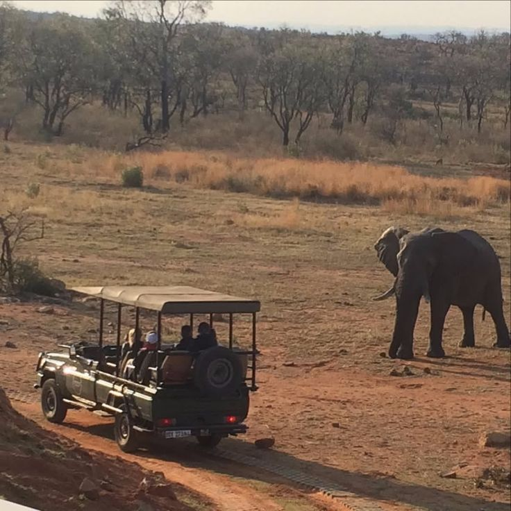 Experience unmatched sightings of the Big 5 on one of our game drives - or bush walks. Image: instagram.com/rangerevan