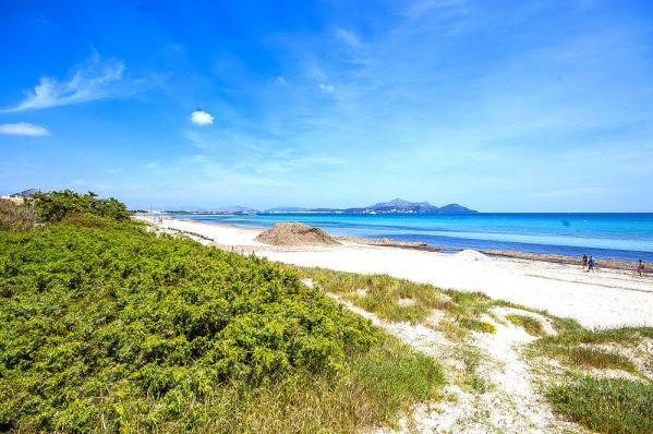 Ein Traum wird wahr! Einmal umfallen & ich bin am kilometerlangen Sandstrand von #playadelmuro. #erstereihe in #alcudia  Die Unterkunft zum Bild findet Ihr auf ferienwohnung.com unter der OnlineID 328WJ3B.  #villa #mallorca #ferienwohnung #spanien #playadelmuro #balearen #meer #relaxtime #holiday #Angebot #Urlaub #reservierennichtvergessen #urlaubsfeeling #treatyourself #eintraumhier #beautiful #iminheaven #weltvergessen #ferien #traum #igersspain #alcudiabeach #igersmallorca