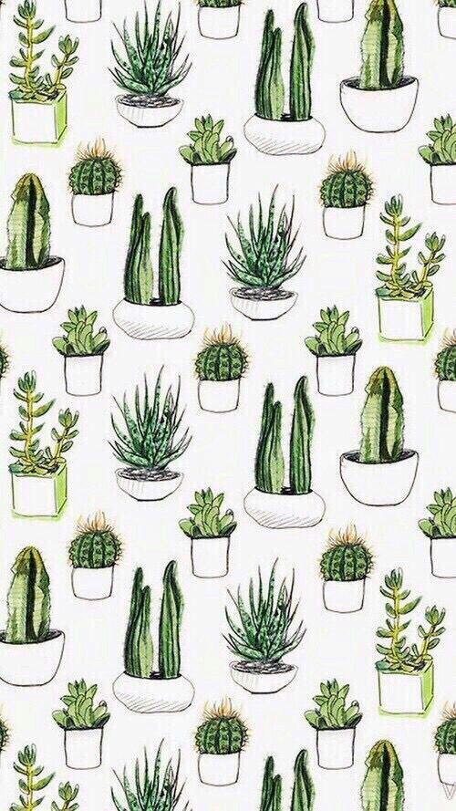 plantinhas //