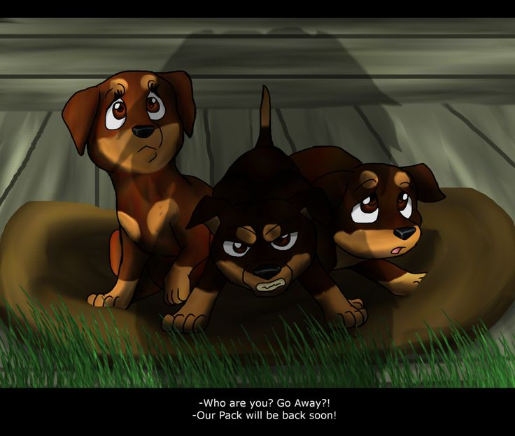 How Many Warriors Books By Erin Hunter Are There: 97 Best Images About Survivors By Erin Hunter On Pinterest