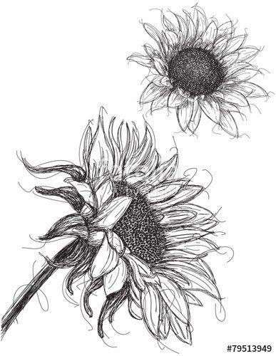 Contoh Gambar Bunga Yang Mudah Sketsa Gambar Bunga Berikut Cocok Untuk Kamu Yang Masih Belajar Membuat Sebuah Sketsa Sebelum Mem Di 2020 Bunga Matahari Sketsa Bunga