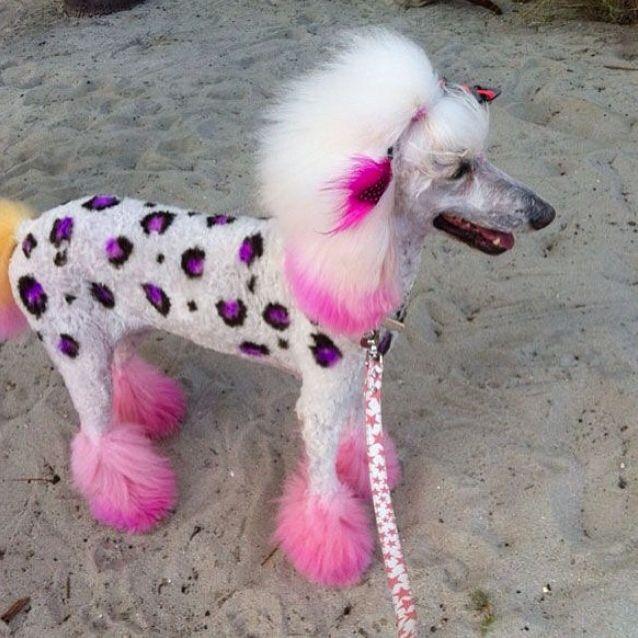 If I had a poodle....