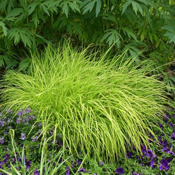 Les 25 meilleures id es de la cat gorie arbustes feuillage persistant sur pinterest for Arbuste persistant ombre le havre