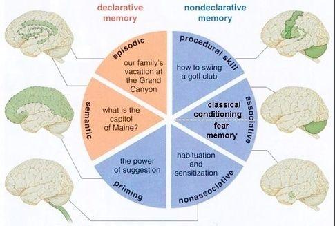 declarative memory - Google Search