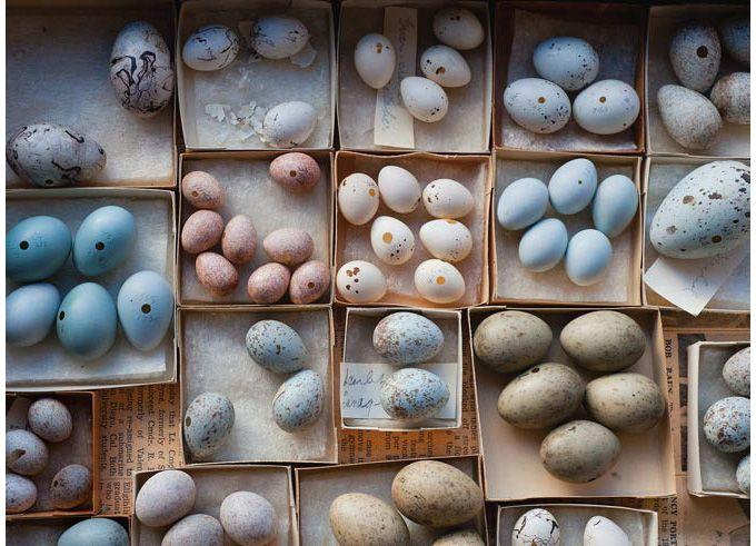 100年前の鳥の卵 | ナショナル ジオグラフィック(NATIONAL GEOGRAPHIC) 日本版公式サイト