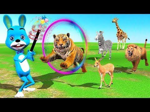 Funny Bunny spielt Zaubertricks für Kinder – Erfahren Sie wilde Tiere Finger Familie m … – Bunny