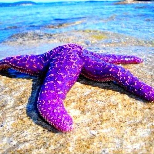 93 best images about Starfish and other underwater ...