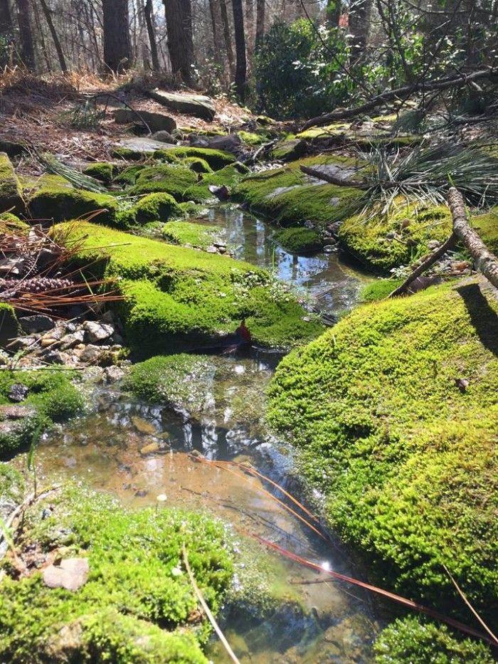 17. South Carolina Botanical Gardens, Clemson, SC