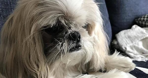 Happy 13th birthday to this pupper http://ift.tt/2dLbuCM