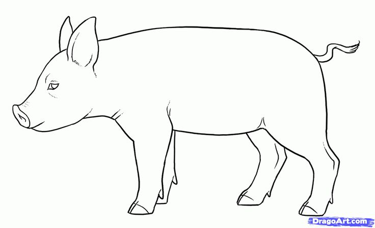 Step 13. How to Draw Piglets