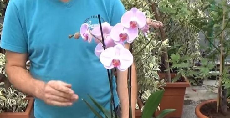 Faire refleurir des orchidées