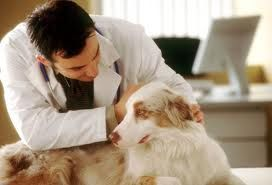 Η   ΕΦΗΜΕΡΙΔΑ   ΤΩΝ    ΣΚΥΛΩΝ: Δωρεάν στειρώσεις και εμβολιασμοί αδέσποτων στην Σ...