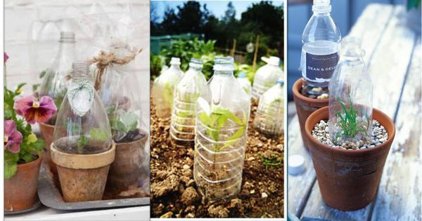 15 tips jardin