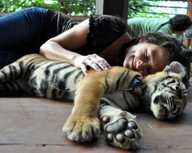 Tiger Temple – Bangkok