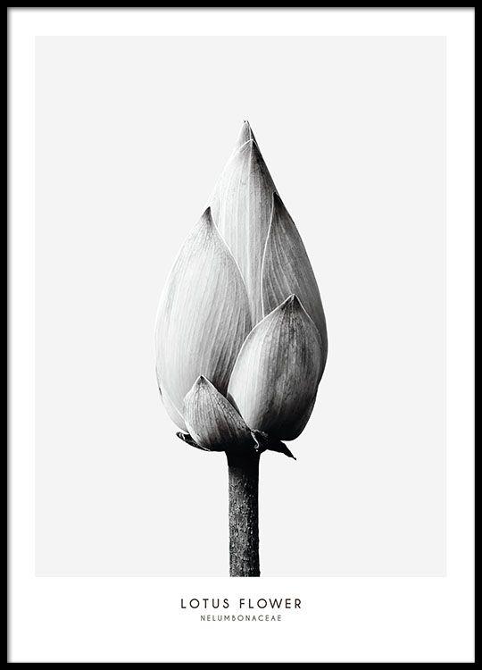 Botanik-Plakat in minimalistischer Einrichtung.