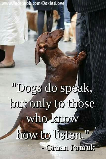 Too true. As his mom, I am the only one who understands our doxie.
