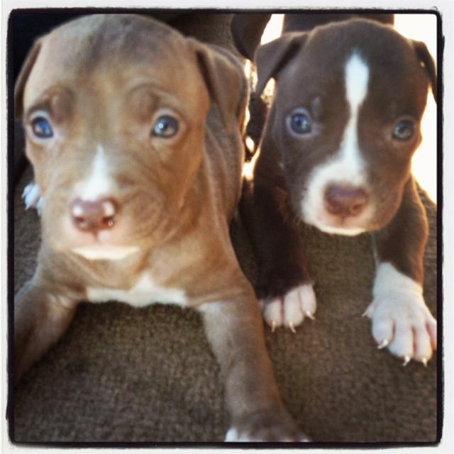 Blue-eyed babies!