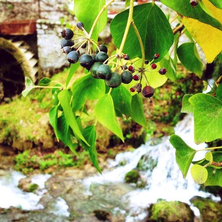 Nature # history = ❤️  #nature #naturelovers #natureporn #naturegram #history #river #leaf #berries #greenery