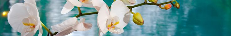 Orchid Roots | Groworchidseasily.com