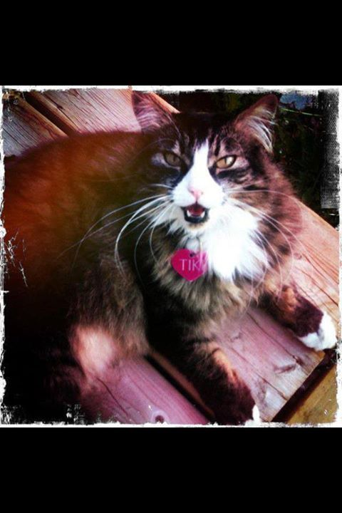 """Fort Mcmurray lost Cats & Dogs June 18 Posted by Megan Elizabeth Rose Byblow: """"Hello. This is Tiki and she went missing almost a year ago from signal medical centre area. I was thinking that maybe someone had taken her in.. I know it has been a while. If you could repost this for me I would really appreciate it. Thank you"""""""