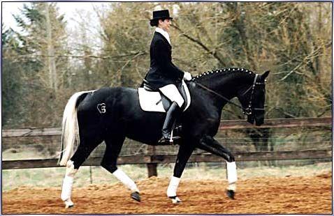 A Black Swedish Warmblood with a white mane an tail... whoa! WANT