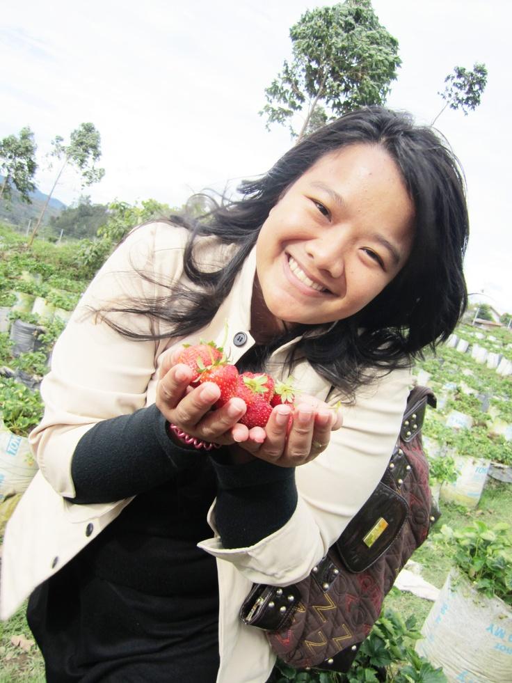 strawberry garden. Jawa Barat