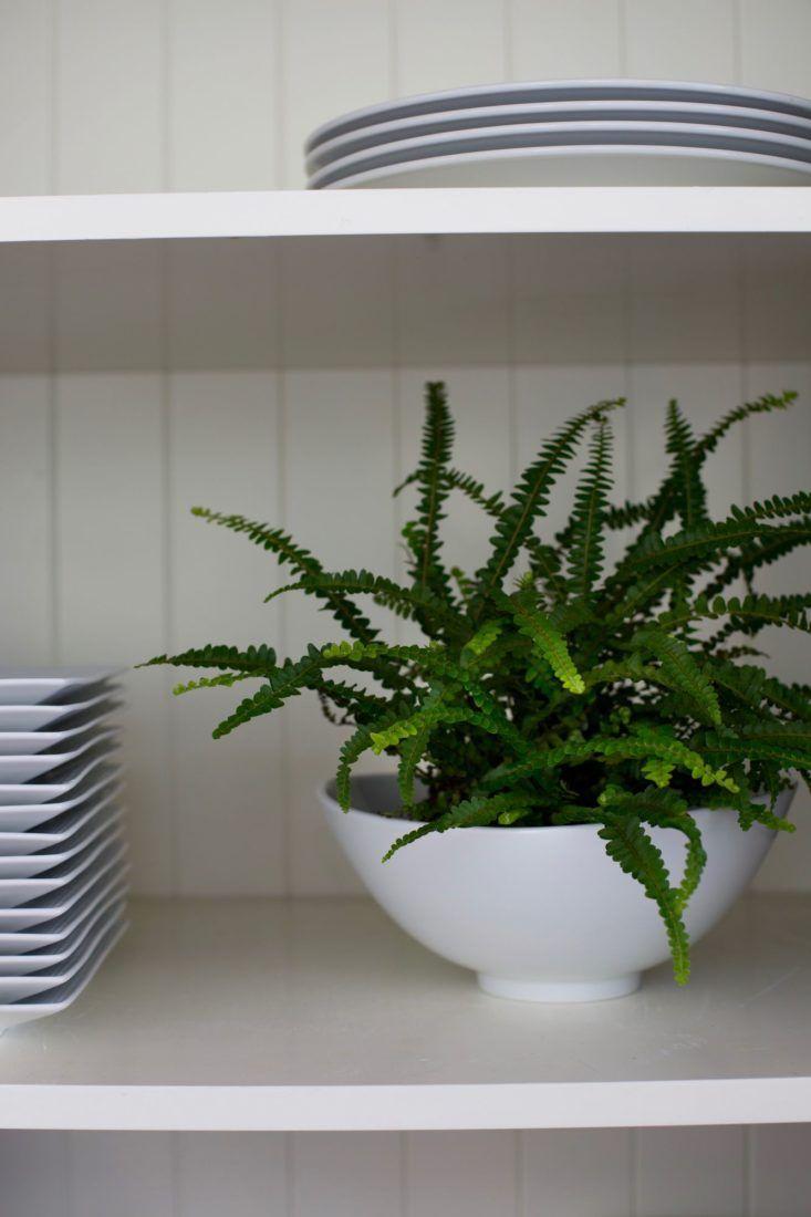 16 best gardens indoor gardening images on pinterest for Plants low light indoor