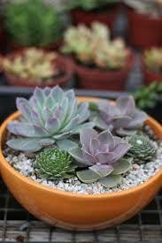 Bildergebnis für welche balkonpflanzen gibt es?