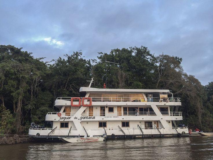 Pantanal Safari: We Meet Adriano - a Magnificent Jaguar | ODP ...