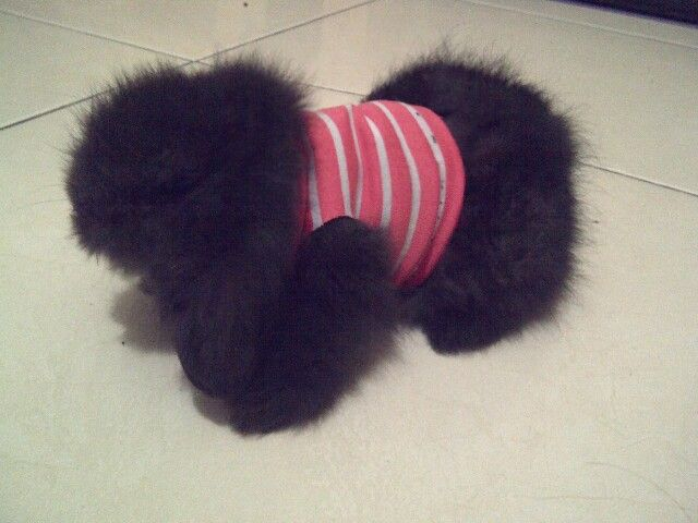 TIMMY Ready for fashion...i never regret to buy this species...hahaa very cute n smartttt