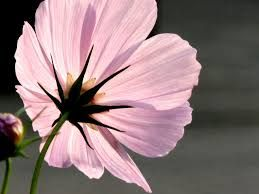 Image result for painting backlit flowers