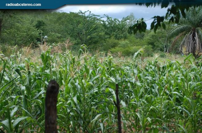 Cosechas irregulares por escasez de lluvias en Totogalpa