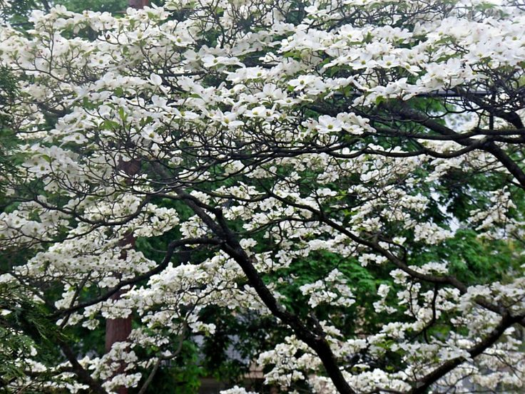 download large scale ecology: model systems