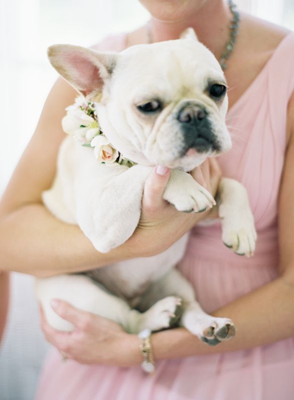Ooooh!  I want my Lola with a flower collar like this one! French bulldog flower girl | Jen Huang Photo