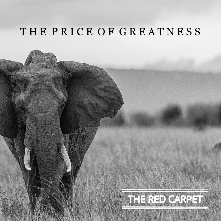 "The Red Carpet ""The price of greatness"" - www.theredcarpetworld.com"