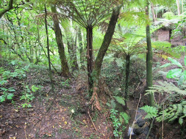 Kepa Bush, Mission Bay, Auckland, New Zealand