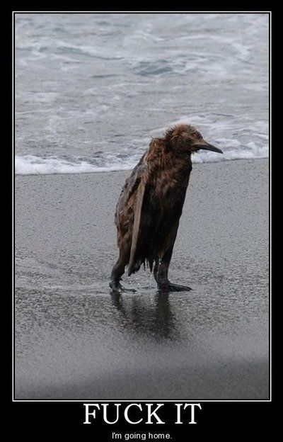 hahaha. great caption.Laugh, Stuff, Funny Captions, Demotivational Posters, Humor, Motivation Posters, Things, Birds, Feelings