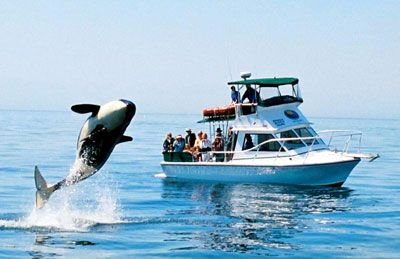 Whale Watching Anybody?  http://www.judysbook.com/San-Juan-Safaris-Whale-Watching-Whale-Watching-fridayharbor-r30113324.htm